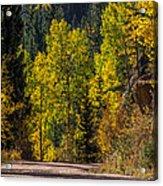 Shades Of Fall Acrylic Print