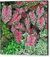 Shades Of Pink And Green And A Hint Of Purple Acrylic Print