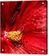 Shades Of Red Acrylic Print