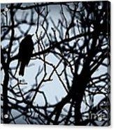 Shadow Among The Shadows Acrylic Print