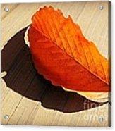 Shadow Cast By Leaf Acrylic Print