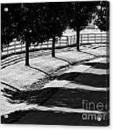 Shadow Patterns Acrylic Print