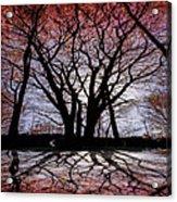 Shadow Secrets Acrylic Print