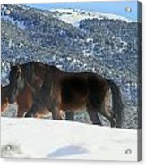 Shadow Stallion Of The Great Basin  Acrylic Print by Jeanne  Bencich-Nations