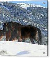 Shadow Stallion Of The Great Basin  Acrylic Print
