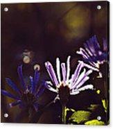 Shadow Treasures Acrylic Print