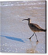 Shadow Walker Acrylic Print