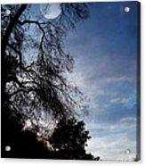 Shadowlands 4 Acrylic Print
