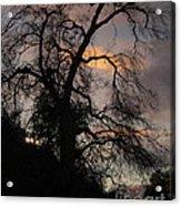 Shadowlands 5 Acrylic Print