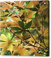 Shadows Of Maple  Acrylic Print