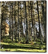 Shadows Of The Larch Forest Sunset No2 Acrylic Print