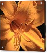 Day Lily Shadows Acrylic Print