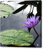 Shadows On A Lily Pond Acrylic Print