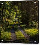 Shady Country Lane Acrylic Print by Paul Herrmann