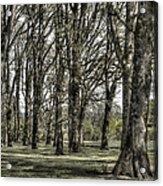Shady Grove Acrylic Print