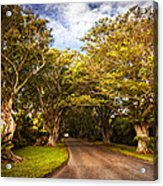 Shady Lane Acrylic Print