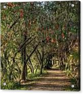 Shady Path Acrylic Print