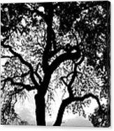 Shady Silhouette Acrylic Print