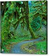 Shag Carpet Acrylic Print