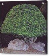 Shaped Tree Acrylic Print