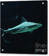 Shark-09451 Acrylic Print