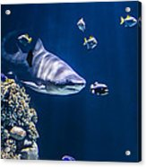 Shark Hunting Acrylic Print