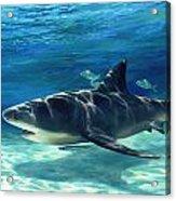 Shark In Depth Acrylic Print