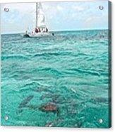 Shark N Sail I Acrylic Print