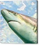 Shark Profile Acrylic Print