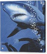Sharkbait Acrylic Print