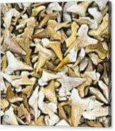 Sharks Teeth Acrylic Print