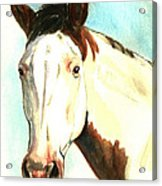 Shawnee Acrylic Print by Linda L Martin