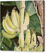 She Has Gone Bananas Acrylic Print