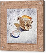She Sells Sea Shells Decorative Collage Acrylic Print