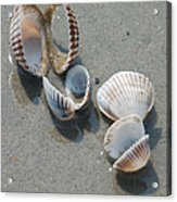 She Sells Sea Shells Acrylic Print