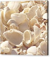 She Sells Seashells Acrylic Print by Kim Hojnacki