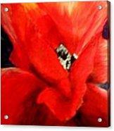 She Wore Red Ruffles Acrylic Print