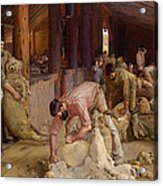 Shearing The Rams  Acrylic Print