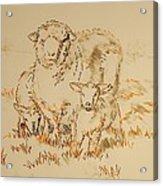 Sheep And Lambs Acrylic Print