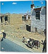 Sheep And Shepherd Along The Road To Shigatse-tibet Acrylic Print