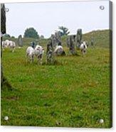 Sheep And Stones At Avebury Acrylic Print