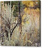Sheep Creek Canyon Wyoming 11 Acrylic Print
