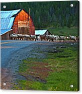 Sheep Crossing Acrylic Print