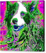 Sheep Dog 20130125v2 Acrylic Print by Wingsdomain Art and Photography