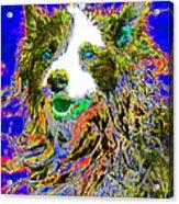 Sheep Dog 20130125v3 Acrylic Print by Wingsdomain Art and Photography