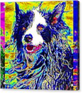 Sheep Dog Three 20130125 Acrylic Print by Wingsdomain Art and Photography