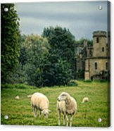 Sheep Grazing By Castle Acrylic Print