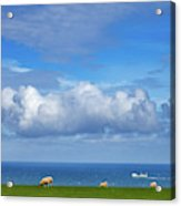 Sheep Grazing On The North Yorkshire Acrylic Print
