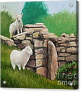 Sheep On A Rock Wall Acrylic Print