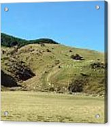 Sheep On Hill Acrylic Print